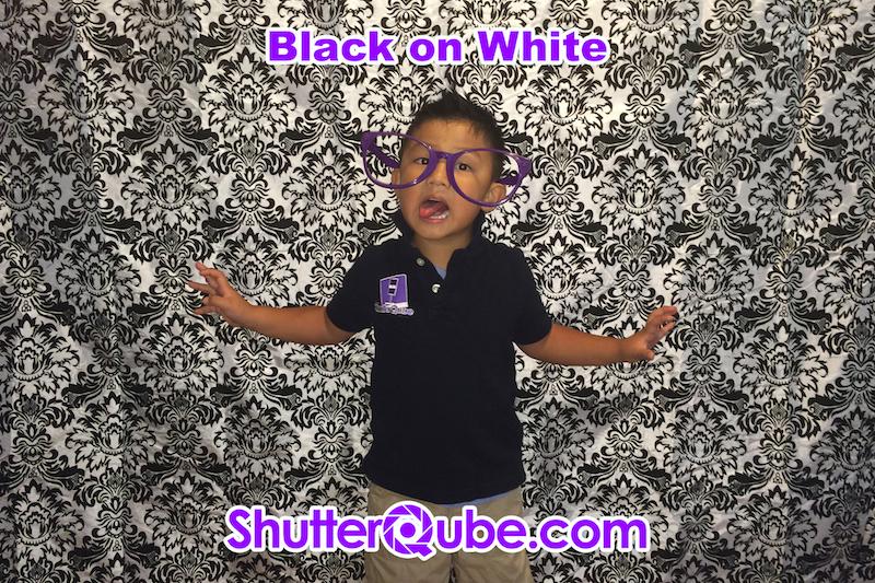 black on white damask backdrop